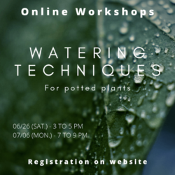 Online Gardening Workshop - Watering techniques for potted plants