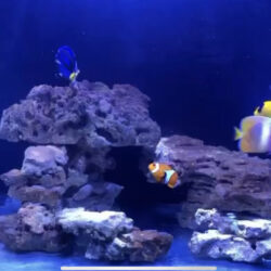 TERFER 17 FO tank to sell w/ tropical fish