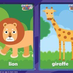 Animal Flashcards 2